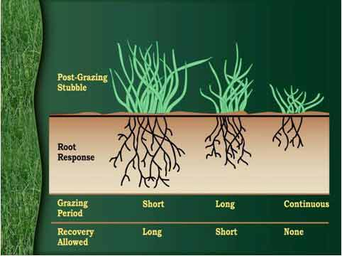 pasture/range management - extension / nrcs - small ... overgrazing diagram