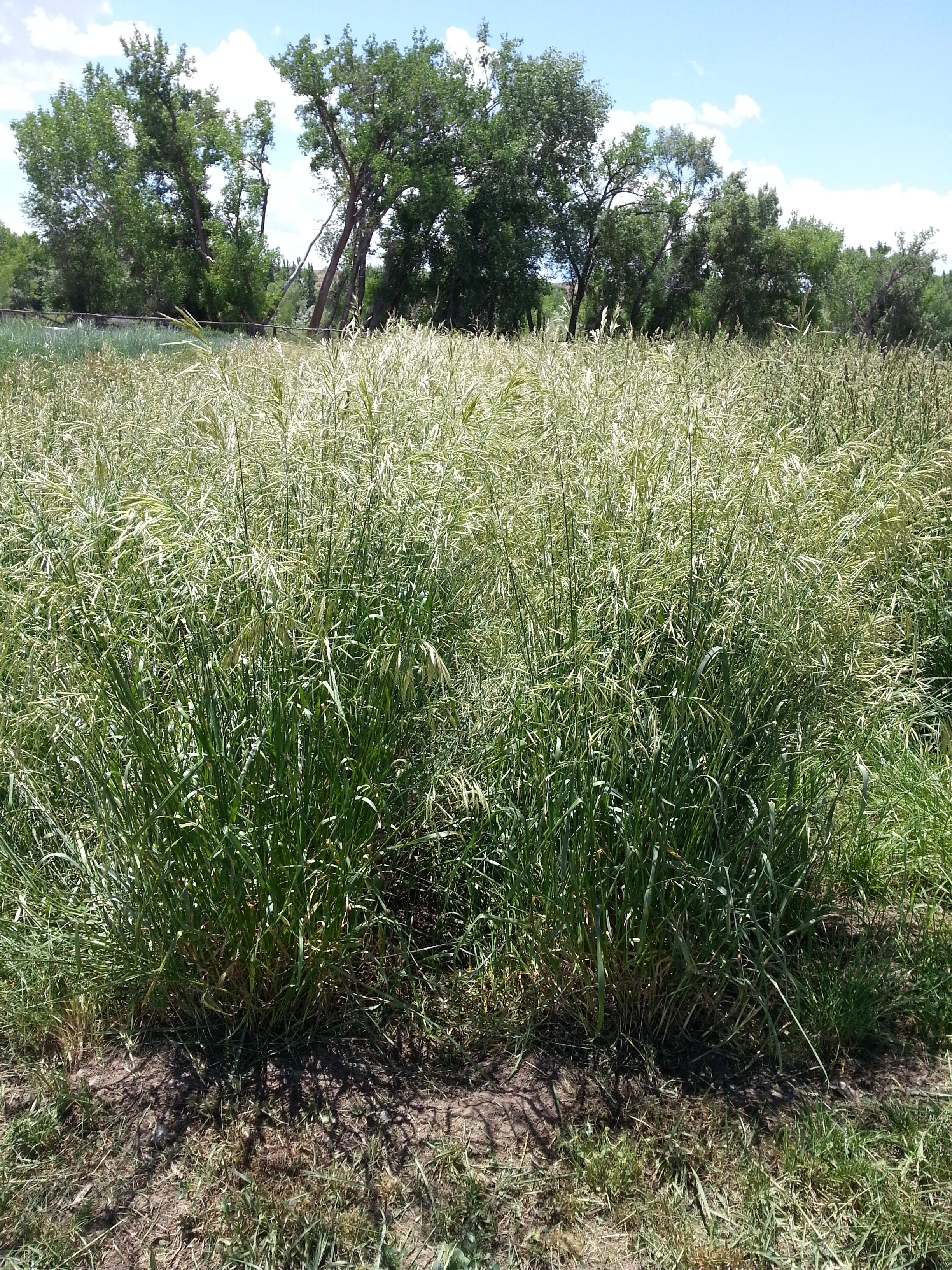 pasture  range management - extension    nrcs